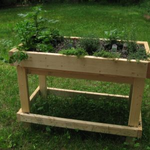 Raised wooden bed with herbs growing