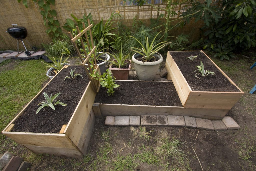 Raised beds in a yard