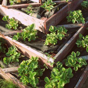 multi-levelled raised garden bed